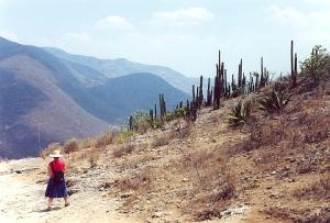 Sierra de Oaxaca, Mexico