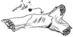 Fossil antler
