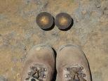Boots Cuba bflyconcr